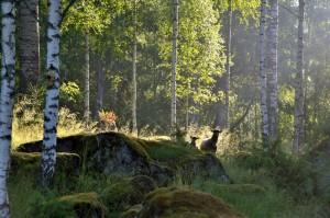 skog-large